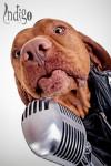 the singing og