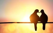 Nikada ne odustajte od ljubavi!